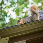 How to Keep Squirrels Off Your Roof